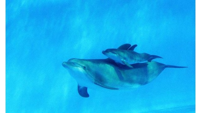 protesters urge french riviera marine park to free dolphins wric