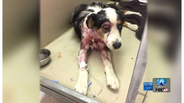Pet owner claims dog was seriously injured while at kennel