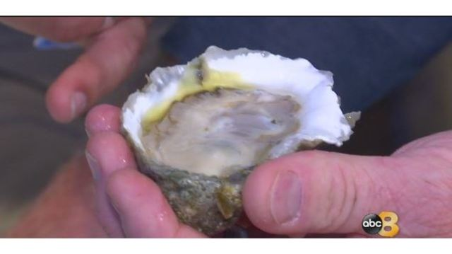 Aw, shucks: Virginia man downs 480 oysters to claim crown
