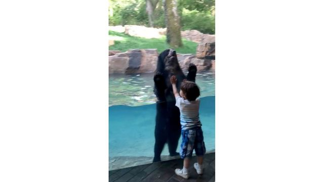 Bear jumping with 5-year-old boy has internet jumping for joy