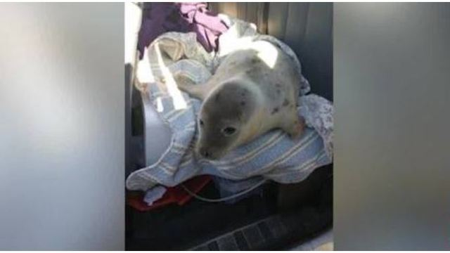 Baby seal rescued in Connecticut passes away