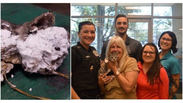 Kitten encased in spray foam finds forever home